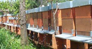 La responsabilità di chi possiede animali con particolare riferimento alle api