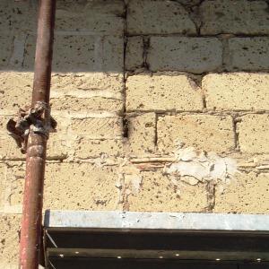 Il recupero di uno sciame selvatico in un muro apicoltore moderno - Nido api finestra ...