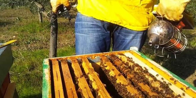 Ricomincia il lavoro in apiario: seconda visita