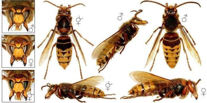 Trappola ecologica per calabroni, vespe e insetti