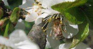 I re delle api
