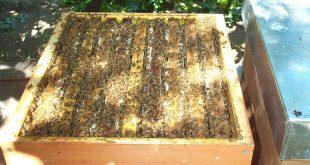Melario pieno di miele e api