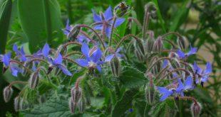 Primi fiori sulla coda dell'inverno
