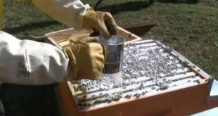 Protocollo operativo: metodo dello zucchero a velo
