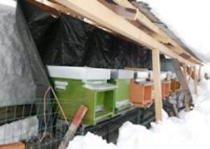 Alveari riparati dalla neve