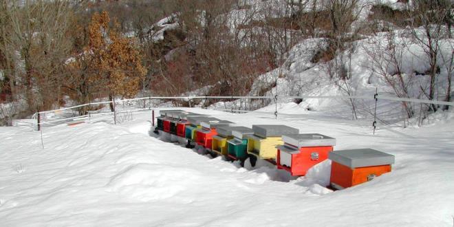 apiario in montagna circondato da neve