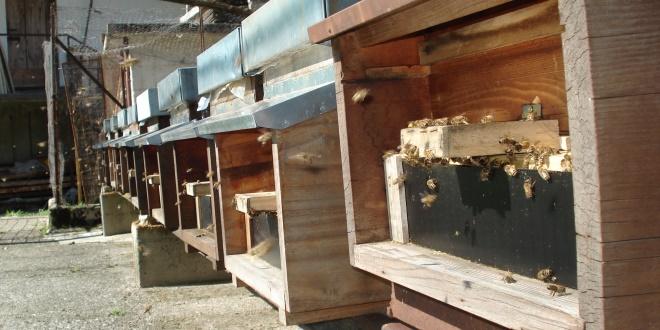 Il saccheggio delle api
