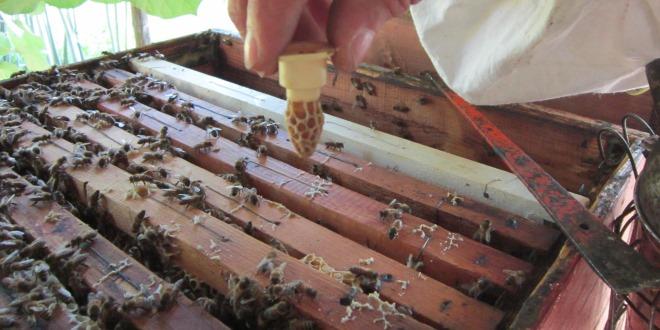 Vobor Allevamento della Regina delle api Allevamento della Scatola della Regina-Allevamento Kit per la Coltivazione delle api Set di Gabbie di plastica per lapicoltura