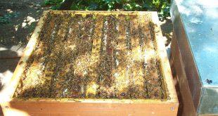 Melario zeppo di api e miele