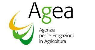 Produzione e commercializzazione dei prodotti dell'apicoltura