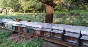 Le visite primaverile preludio della nuova stagione apistica