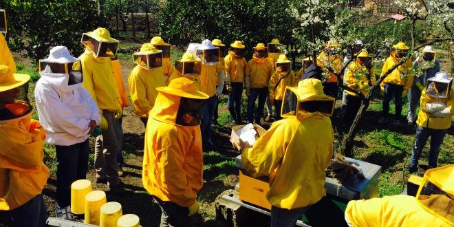 Lezione pratica di apicoltura