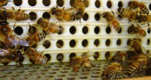trappola per il polline
