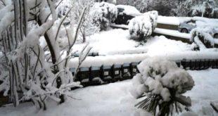 Alveari invernati sotto la neve