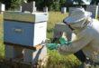 Controllo biologico della varroa