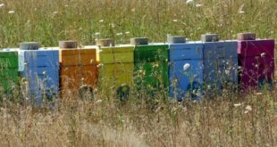 Sulla responsabilità oggettiva di un apicoltore