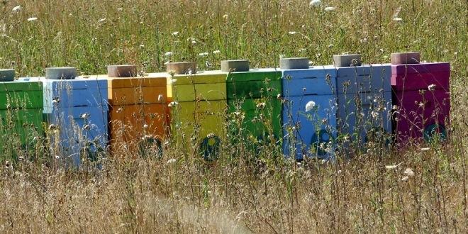 nuovo-art-896-bis-c-c-apicoltura-e-poteri-del-sindaco