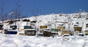 Invernamento delle api