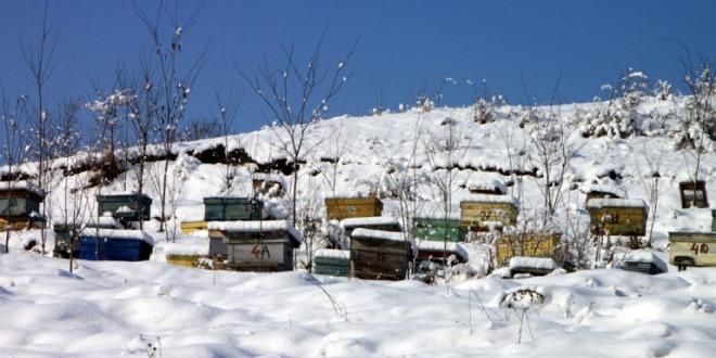 Invernamento  e preinvernamento