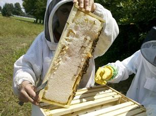 Clima: sos api, addio a 1 vaso di miele su 4