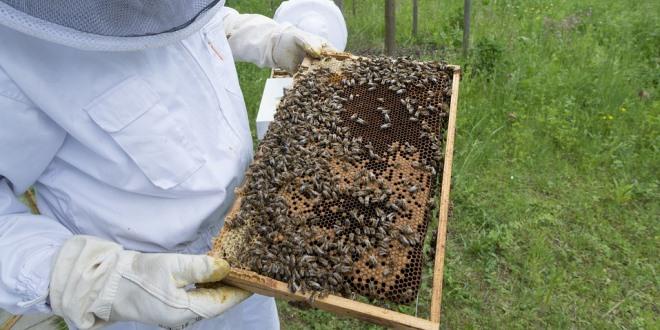 Ricomincia il lavoro in apiario: prima visita