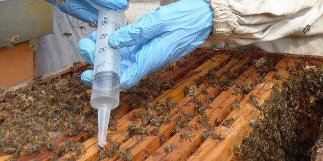Preparare le api all'invernamento