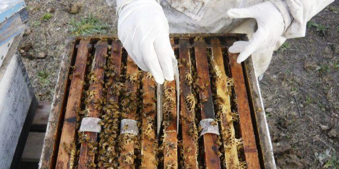 Aluen CAP una speranza concreta nella lotta alla varroa