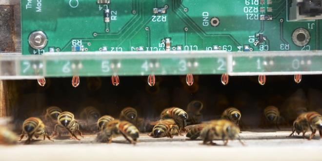 Come le api rimangono fresche nelle calde giornate estive