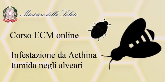 Corso ECM online / Infestazione da Aethina tumida negli alveari