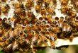 In Germania multe salate per chi uccide le api e le vespe