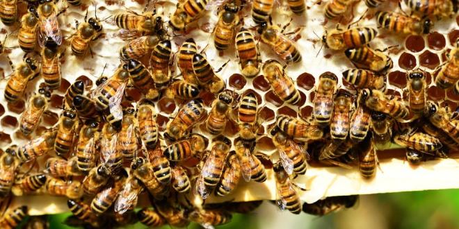 Favi nuovi, api sane