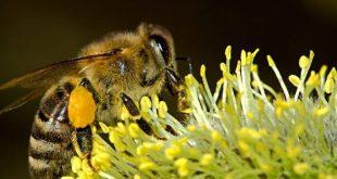 Niente forfait per l'apicoltura