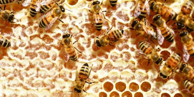 In apicoltura, igiene significa pulizia