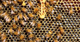 Federazione apicoltori