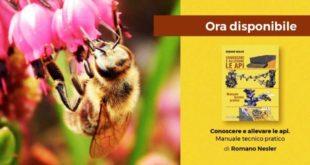 Conoscere e allevare le api