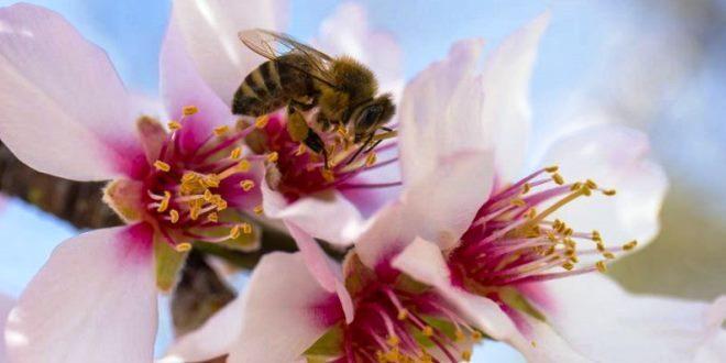 Api mellifere, solo una piccola percentuale di apicoltori utilizza gli antibiotici