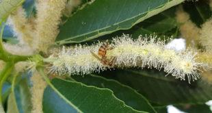 La sopravvivenza delle api: tra fragili equilibri