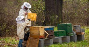 """Miele, il 2021 amaro degli apicoltori siciliani. """"Intere produzioni azzerate"""""""