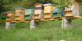 Vendo api